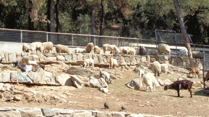 16 Zooausflug Mit Dem Kindergarten