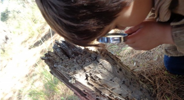 Waldausflug KiGa