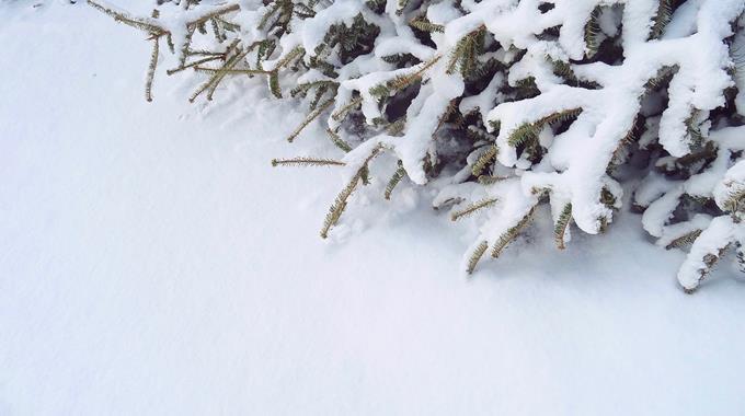 Schnee 24