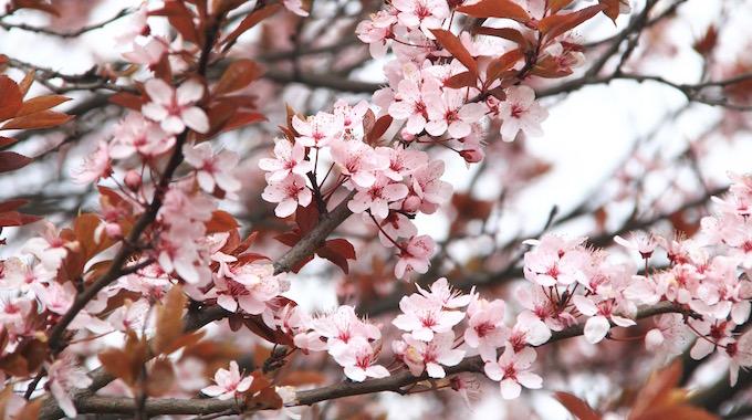 Die Vorschule Auf Der Suche Nach Dem Frühling